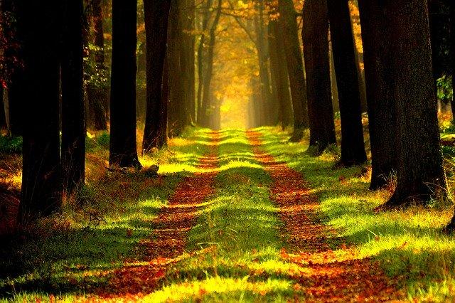 drzewa ozdobne jesienią